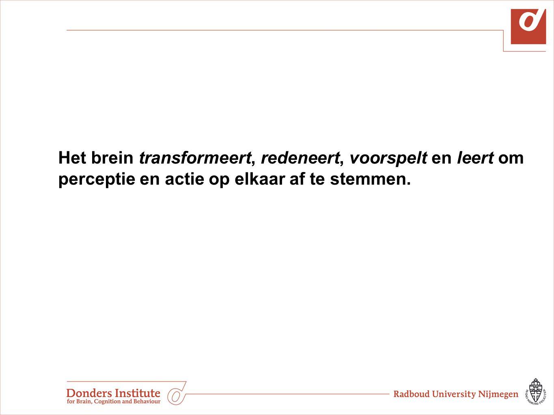Het brein transformeert, redeneert, voorspelt en leert om perceptie en actie op elkaar af te stemmen.