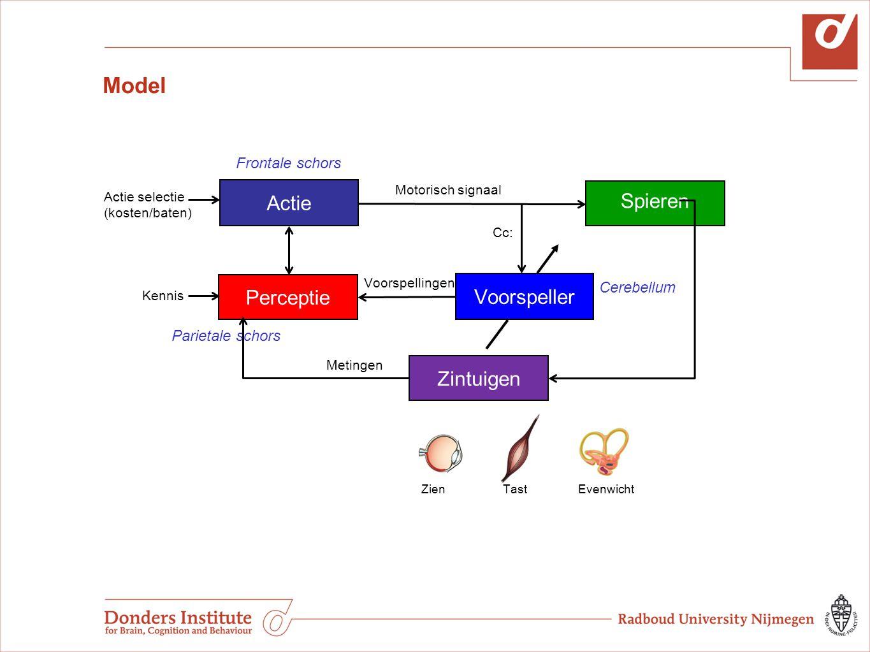Model Actie Spieren Perceptie Voorspeller Zintuigen Frontale schors