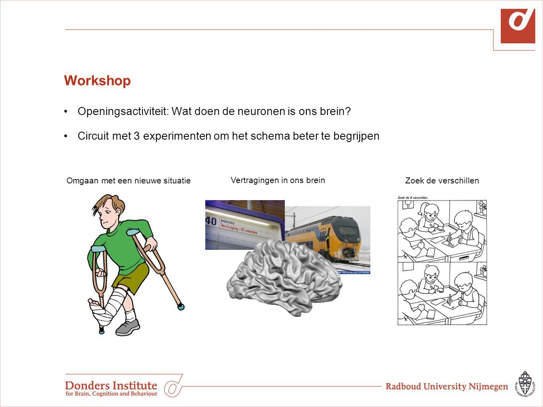 Workshop Openingsactiviteit: Wat doen de neuronen is ons brein