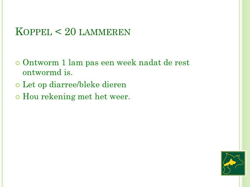 Koppel < 20 lammeren Ontworm 1 lam pas een week nadat de rest ontwormd is. Let op diarree/bleke dieren.