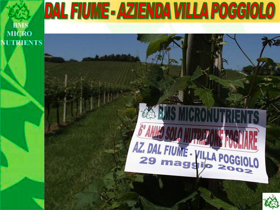 DAL FIUME - AZIENDA VILLA POGGIOLO