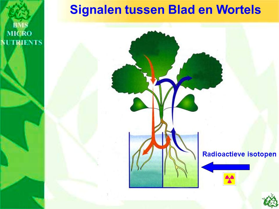 Signalen tussen Blad en Wortels