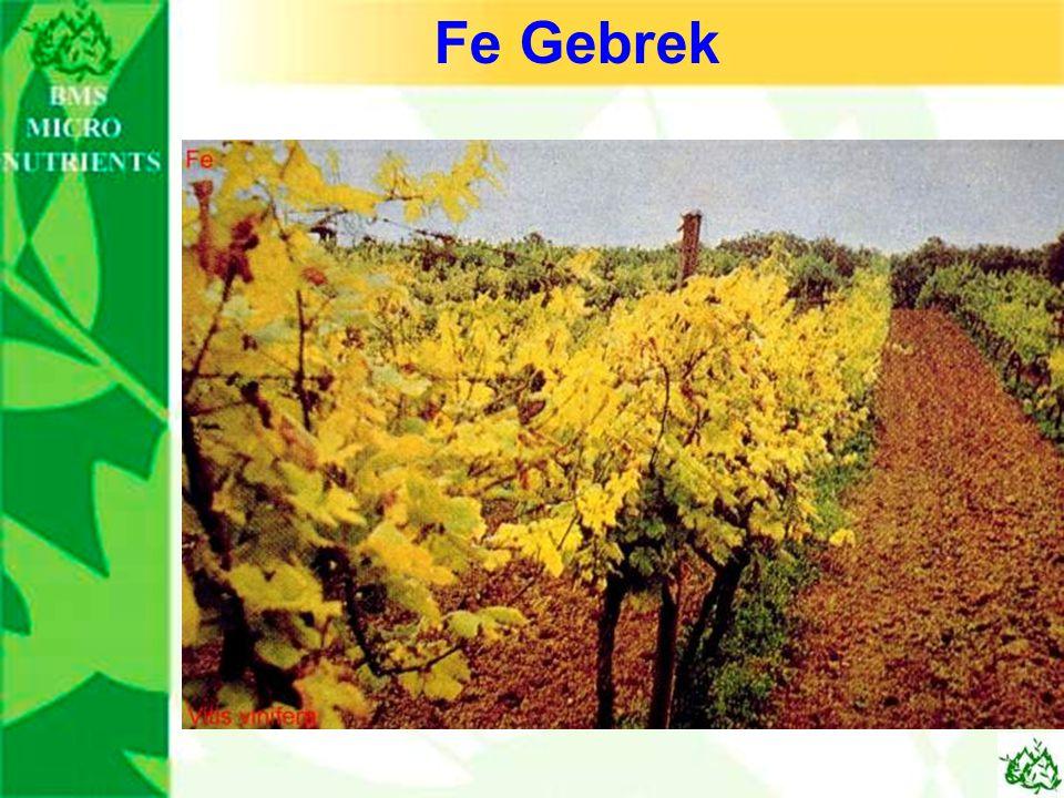 Fe Gebrek