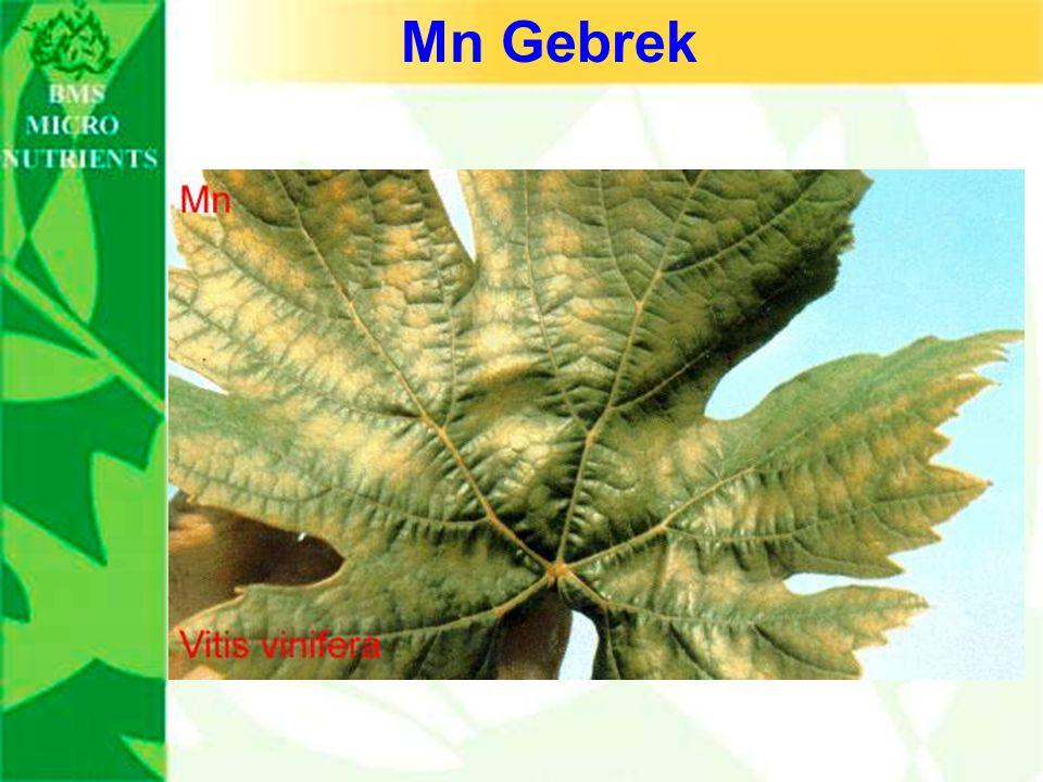 Mn Gebrek