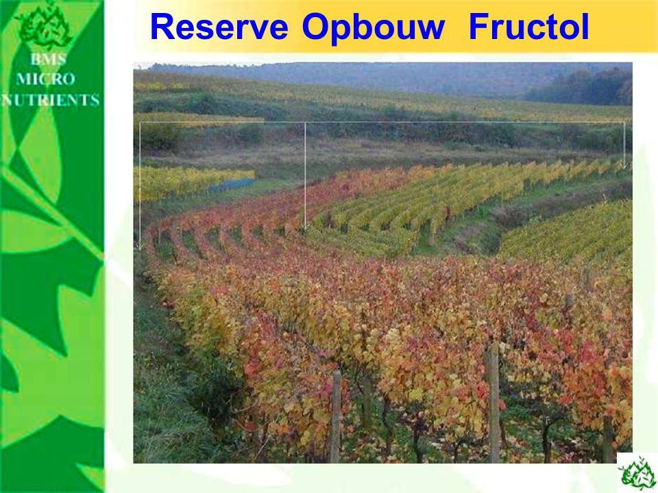 Reserve Opbouw Fructol