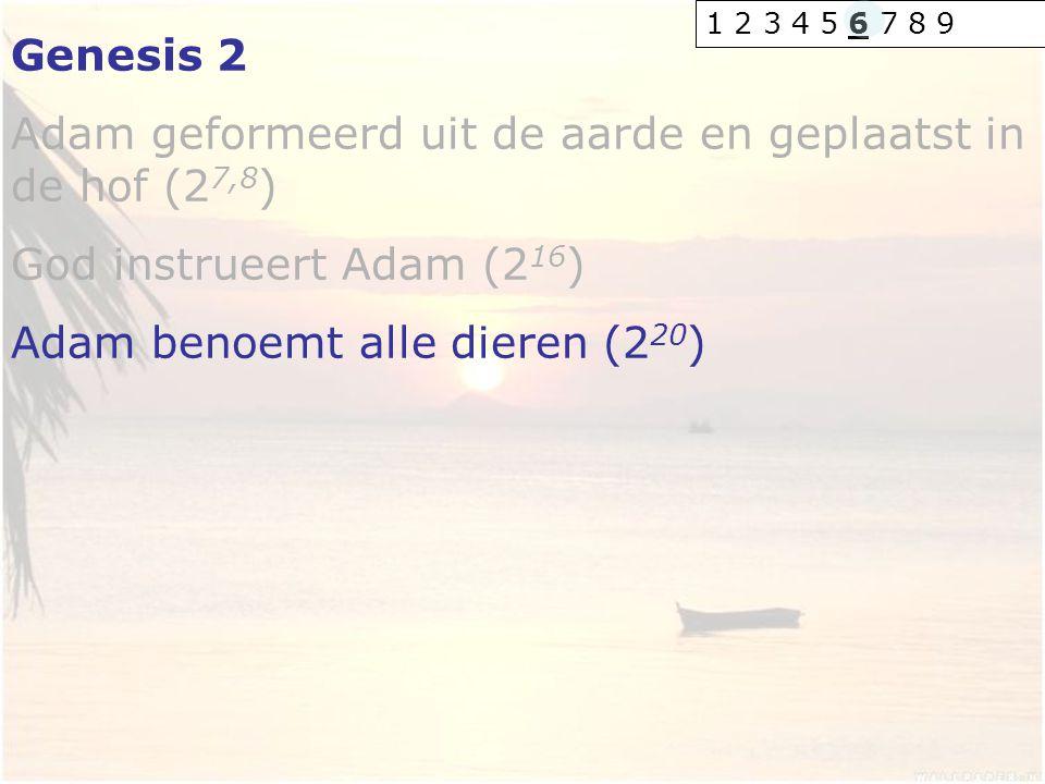 Adam geformeerd uit de aarde en geplaatst in de hof (27,8)