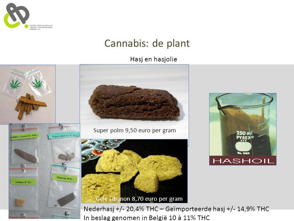 Cannabis: de plant Hasj en hasjolie