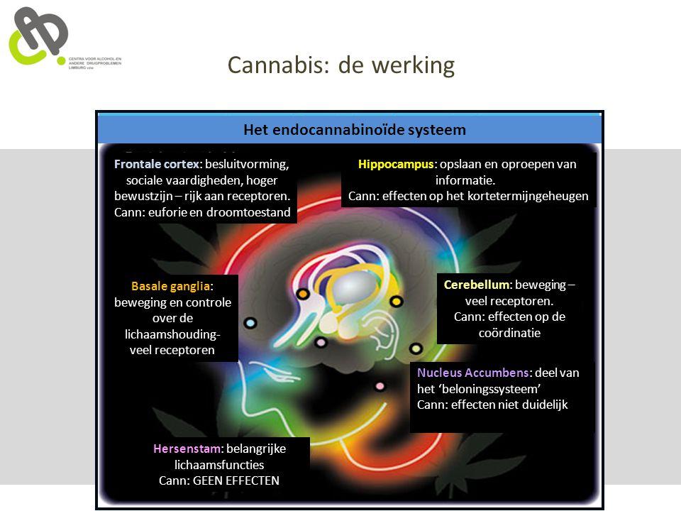 Het endocannabinoïde systeem