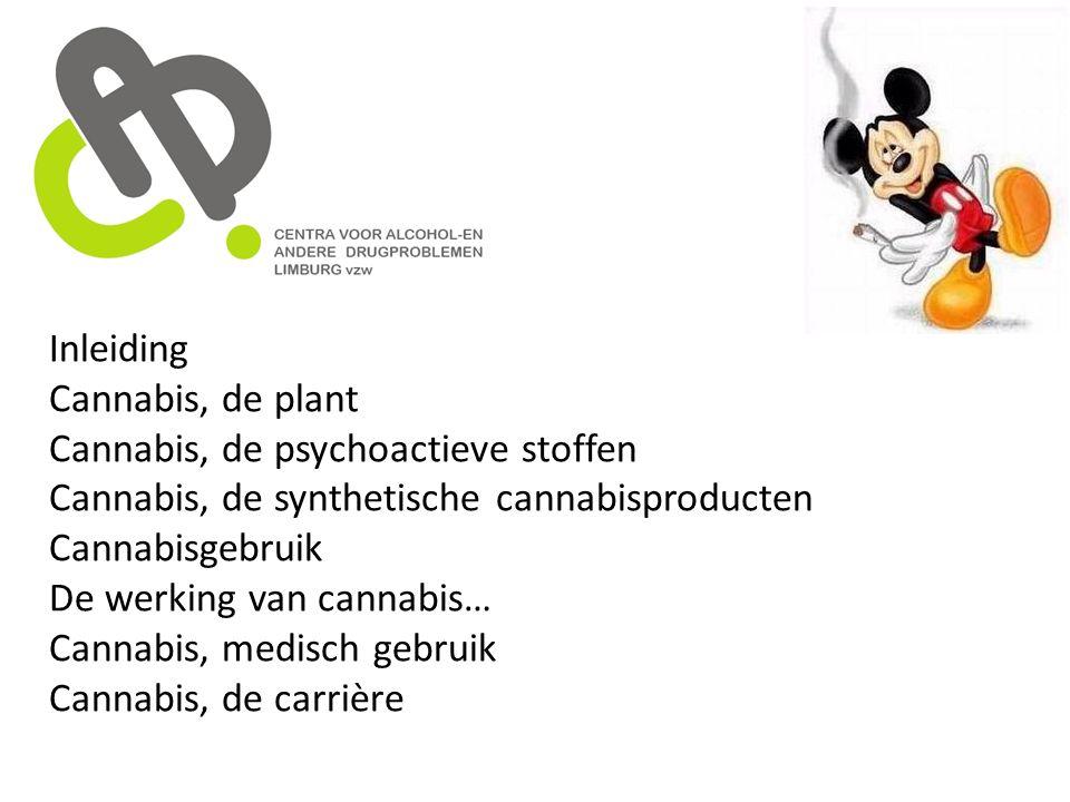 Inleiding Cannabis, de plant. Cannabis, de psychoactieve stoffen. Cannabis, de synthetische cannabisproducten.