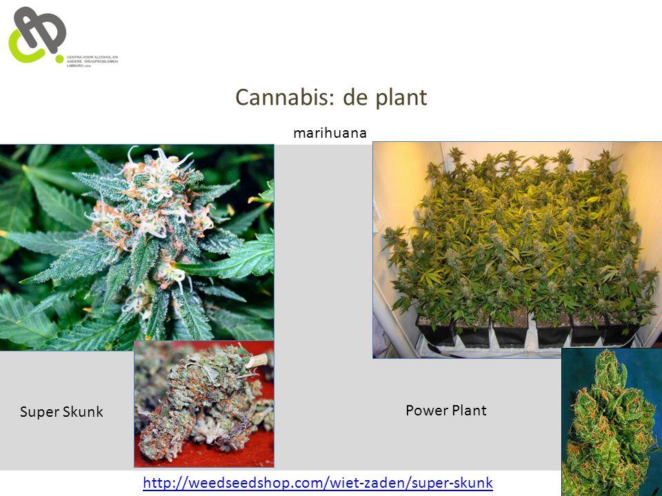 Cannabis: de plant marihuana Super Skunk Power Plant