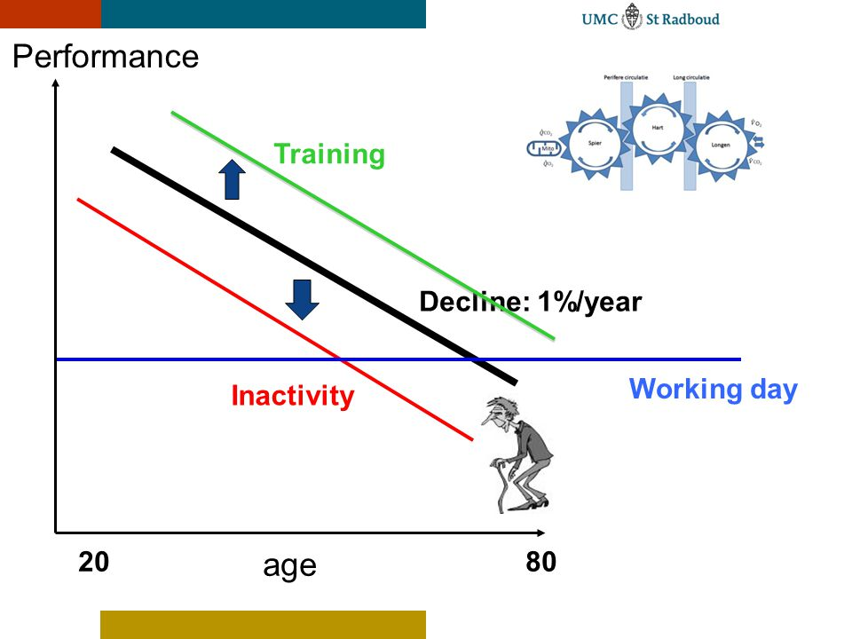 Performance Training Decline: 1%/year Working day Inactivity 20 age 80
