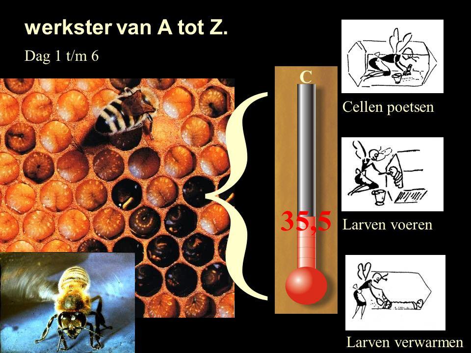 { 35,5 werkster van A tot Z. C Dag 1 t/m 6 Cellen poetsen