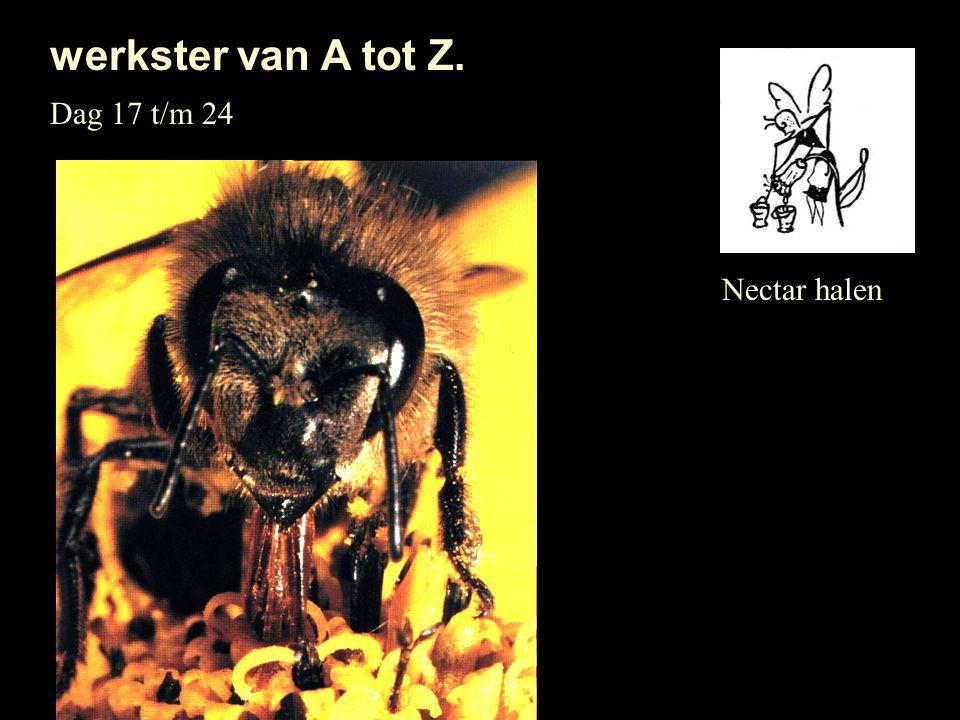 werkster van A tot Z. Dag 17 t/m 24 Nectar halen