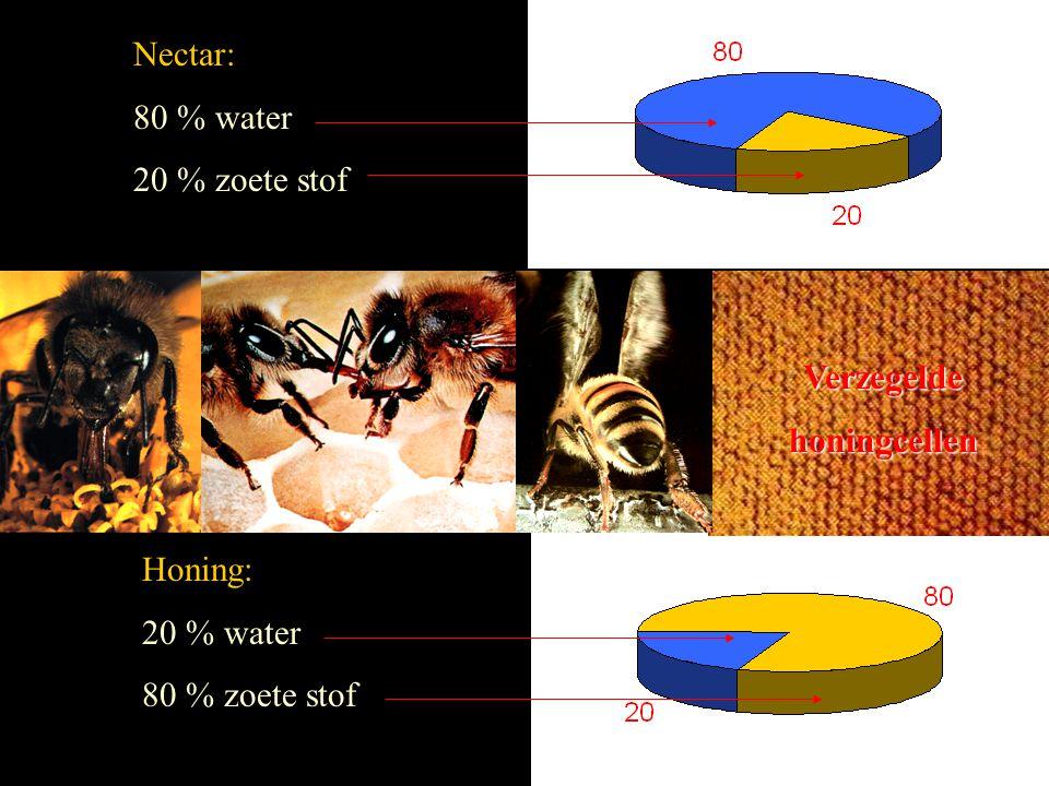 Nectar: 80 % water 20 % zoete stof Verzegelde honingcellen Honing: 20 % water 80 % zoete stof