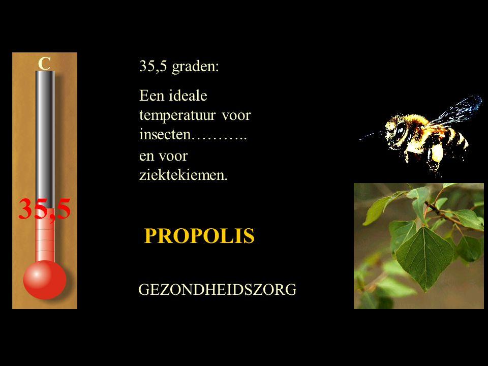 35,5 PROPOLIS C 35,5 graden: Een ideale temperatuur voor insecten………..