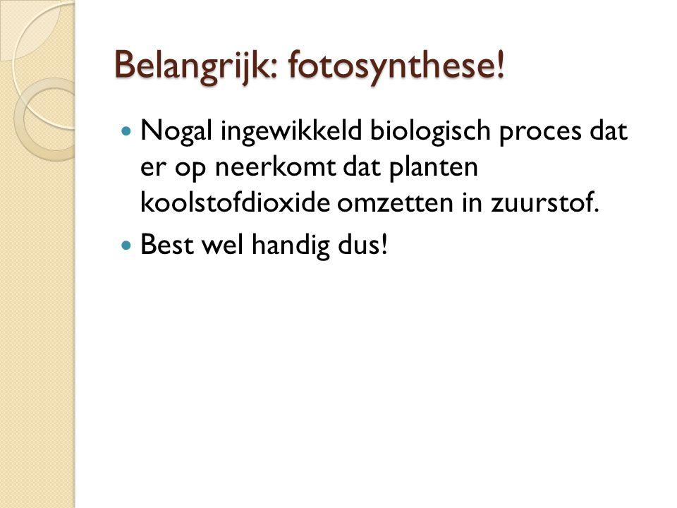 Belangrijk: fotosynthese!