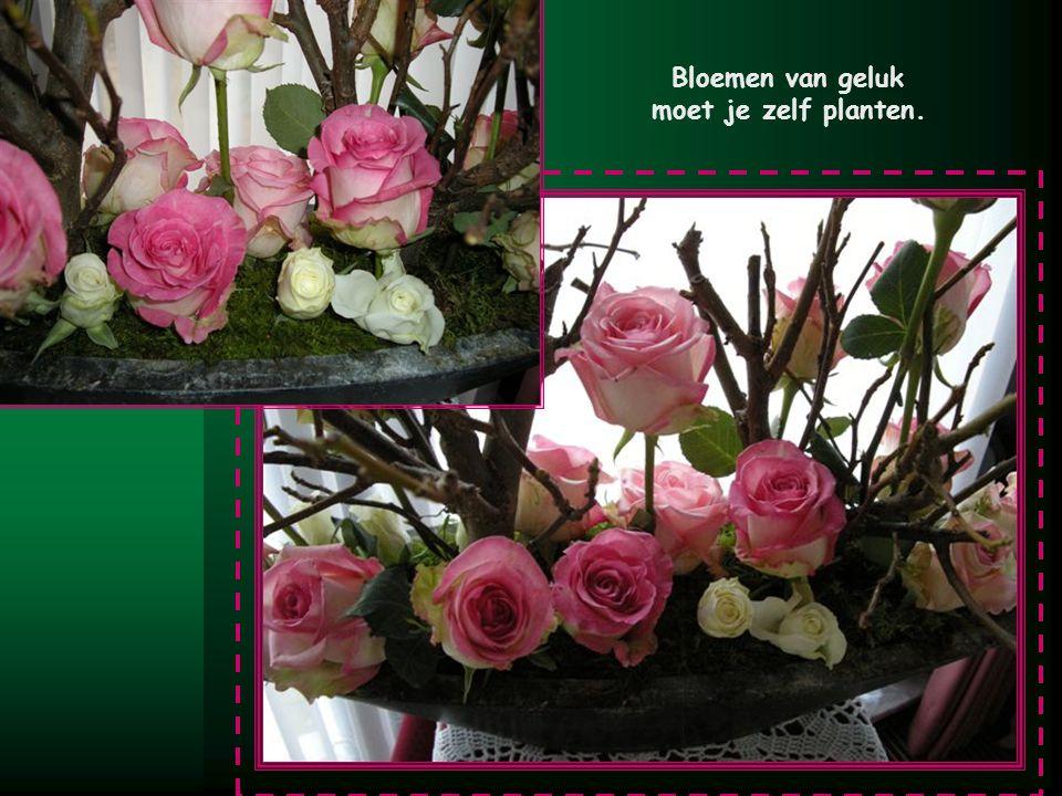 Bloemen van geluk moet je zelf planten. M