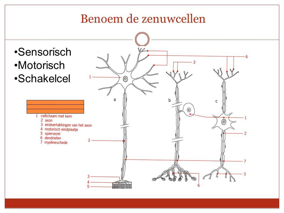 Benoem de zenuwcellen Sensorisch Motorisch Schakelcel