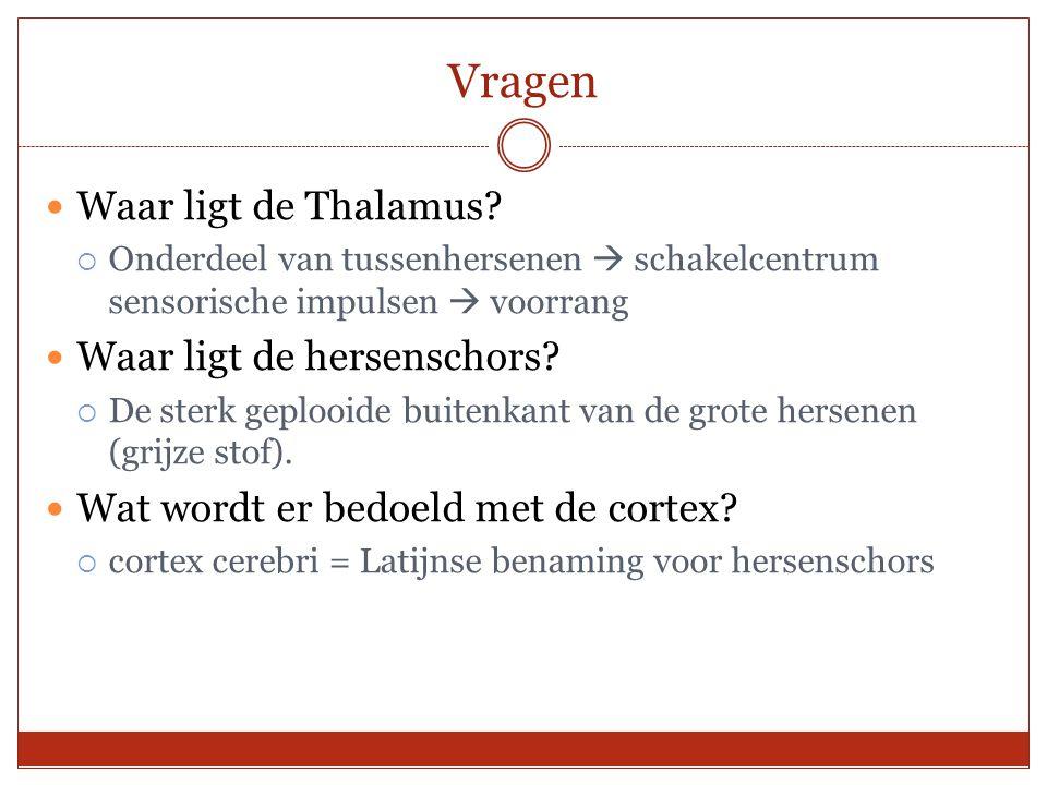 Vragen Waar ligt de Thalamus Waar ligt de hersenschors