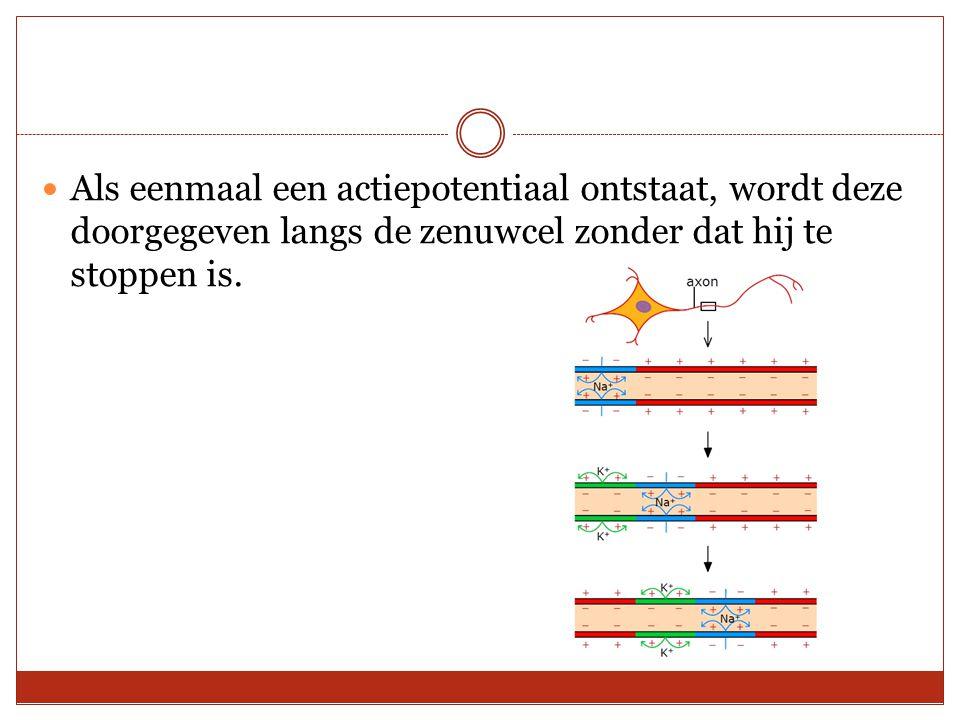Als eenmaal een actiepotentiaal ontstaat, wordt deze doorgegeven langs de zenuwcel zonder dat hij te stoppen is.