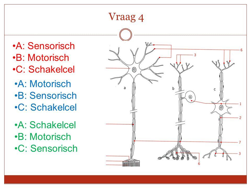 Vraag 4 A: Sensorisch B: Motorisch C: Schakelcel A: Motorisch