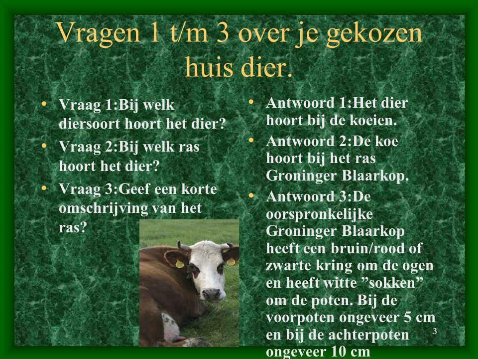 Vragen 1 t/m 3 over je gekozen huis dier.