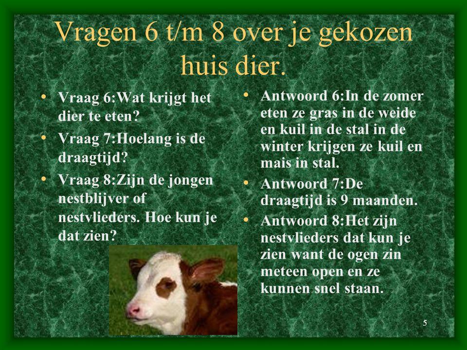 Vragen 6 t/m 8 over je gekozen huis dier.
