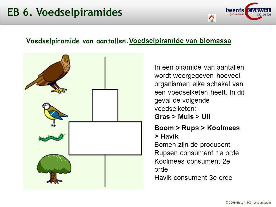 EB 6. Voedselpiramides Voedselpiramide van aantallen - Voedselpiramide van biomassa.