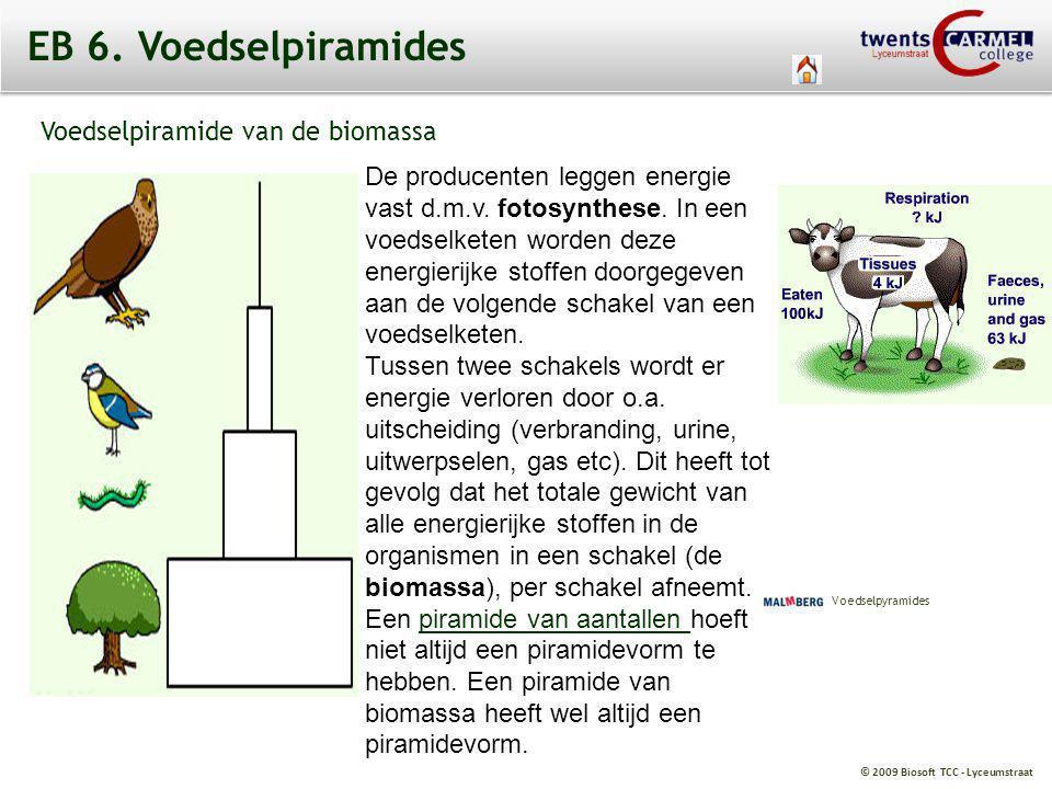 EB 6. Voedselpiramides Voedselpiramide van de biomassa.