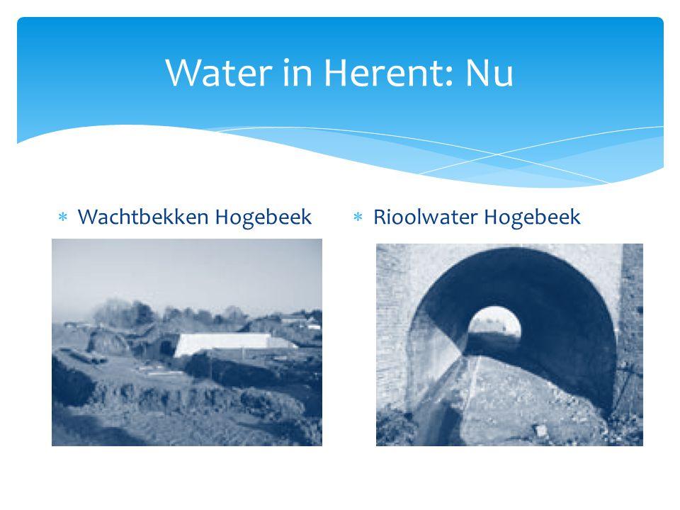 Water in Herent: Nu Wachtbekken Hogebeek Rioolwater Hogebeek