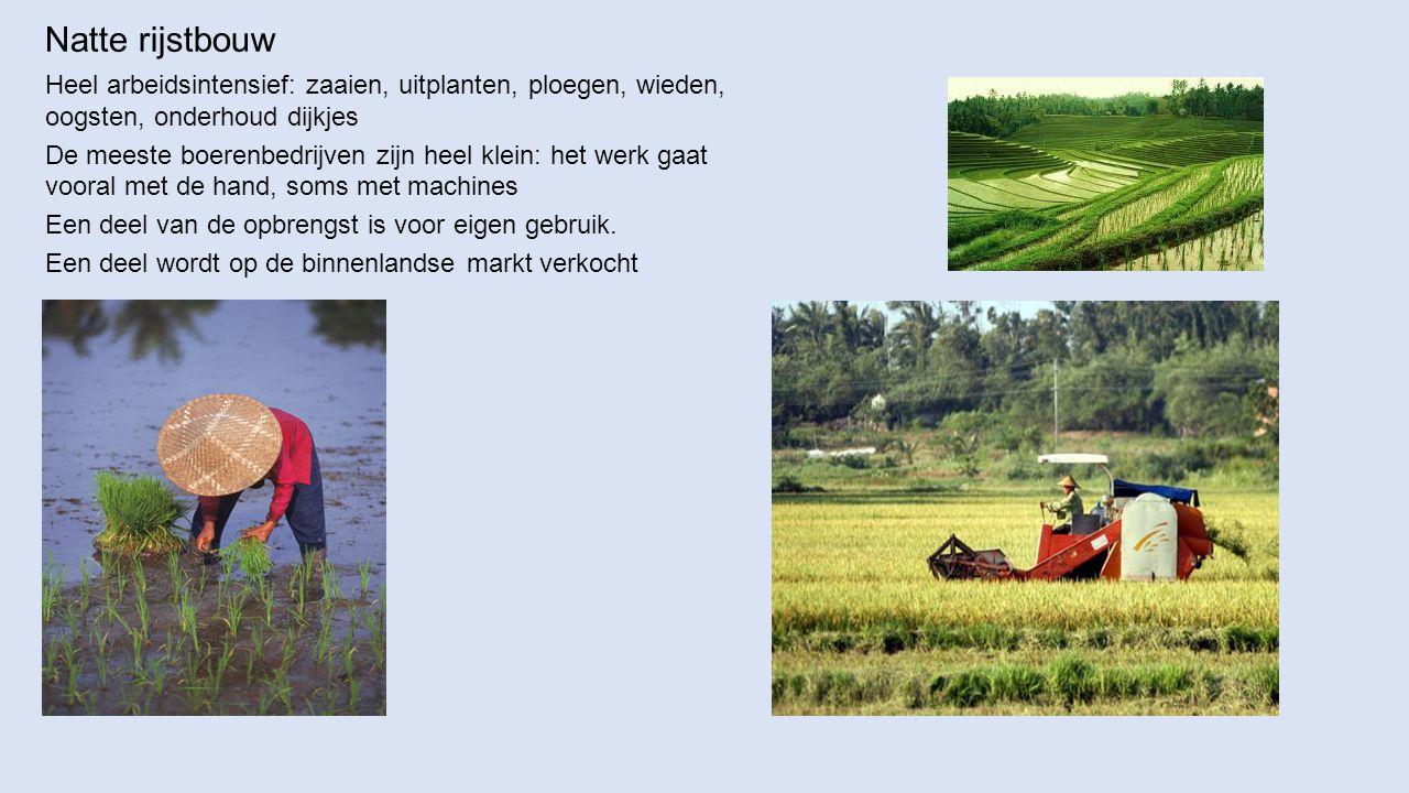 Natte rijstbouw Heel arbeidsintensief: zaaien, uitplanten, ploegen, wieden, oogsten, onderhoud dijkjes.