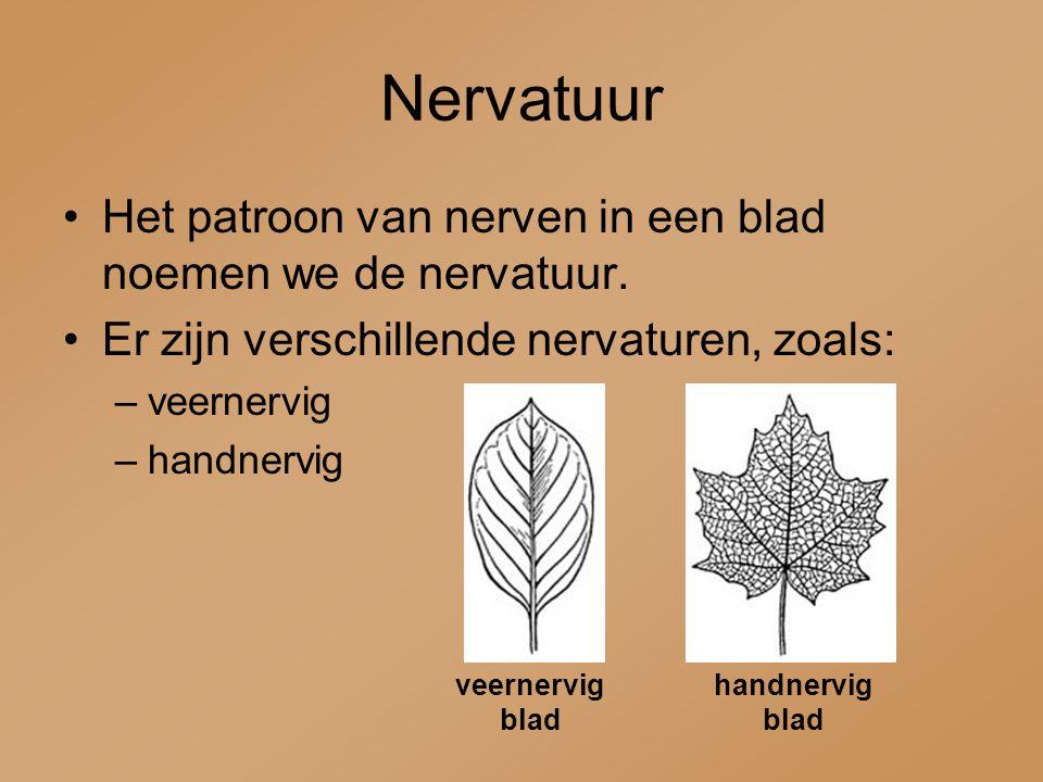 Nervatuur Het patroon van nerven in een blad noemen we de nervatuur.