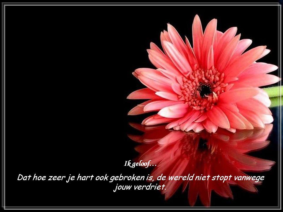 Ik geloof… Dat hoe zeer je hart ook gebroken is, de wereld niet stopt vanwege jouw verdriet.