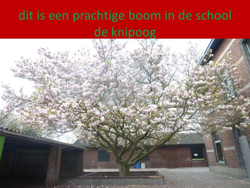 dit is een prachtige boom in de school de knipoog