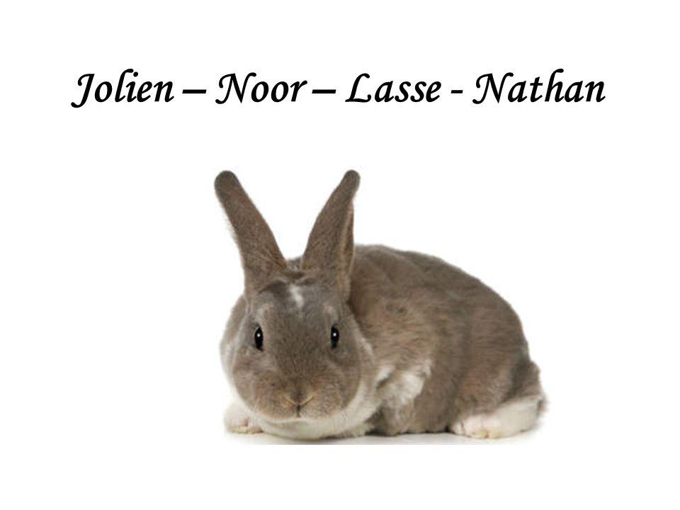 Jolien – Noor – Lasse - Nathan
