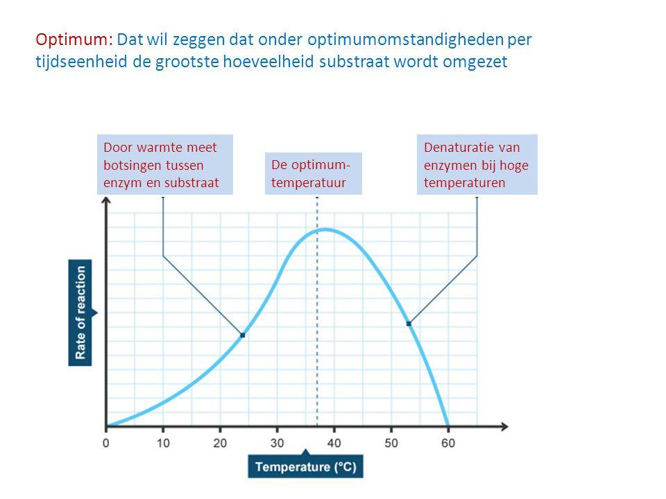 Optimum: Dat wil zeggen dat onder optimumomstandigheden per tijdseenheid de grootste hoeveelheid substraat wordt omgezet
