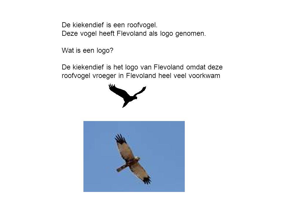 De kiekendief is een roofvogel.