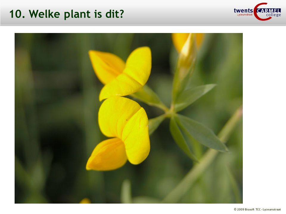 10. Welke plant is dit