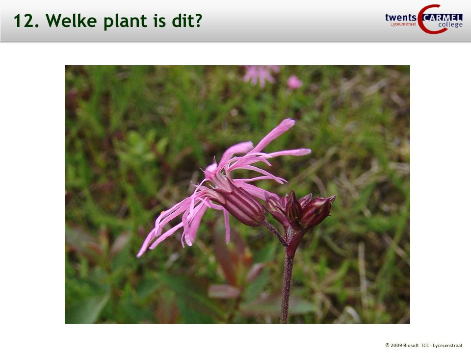 12. Welke plant is dit