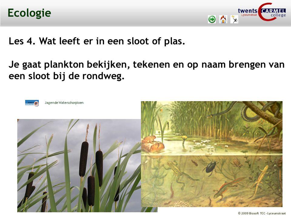 Ecologie Les 4. Wat leeft er in een sloot of plas.