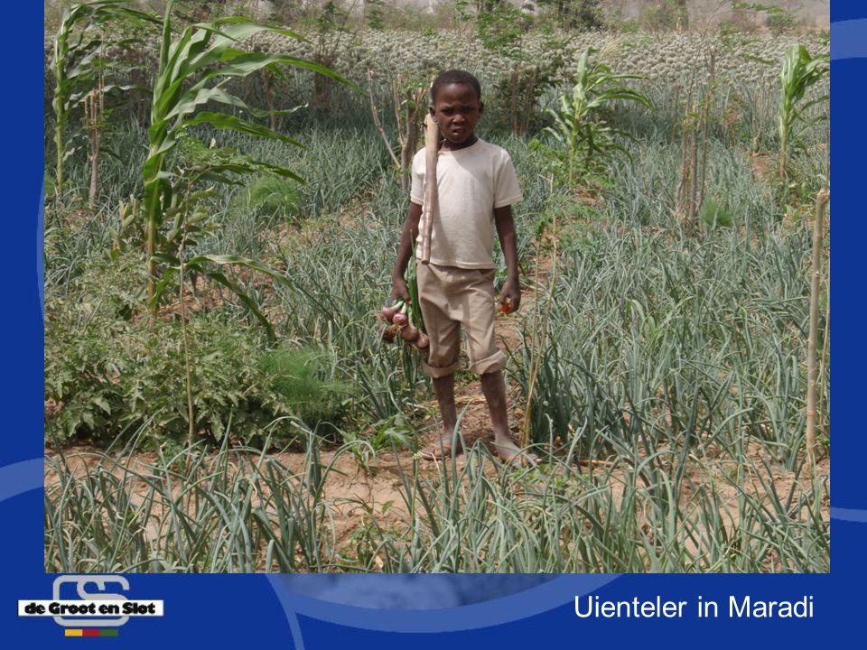 Uienteler in Maradi