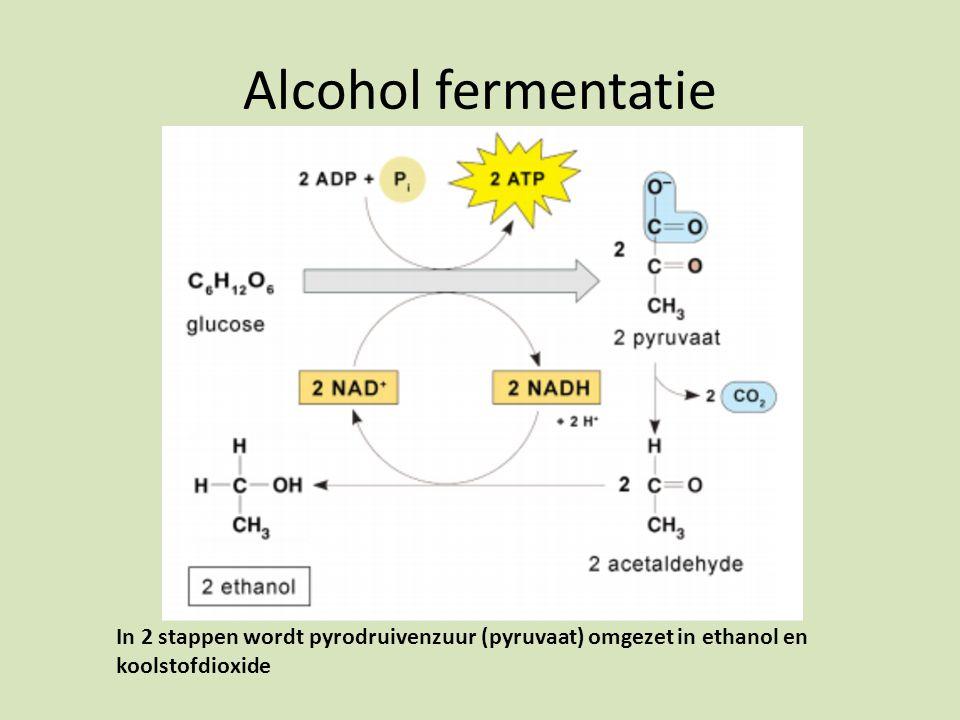 Alcohol fermentatie In 2 stappen wordt pyrodruivenzuur (pyruvaat) omgezet in ethanol en koolstofdioxide.