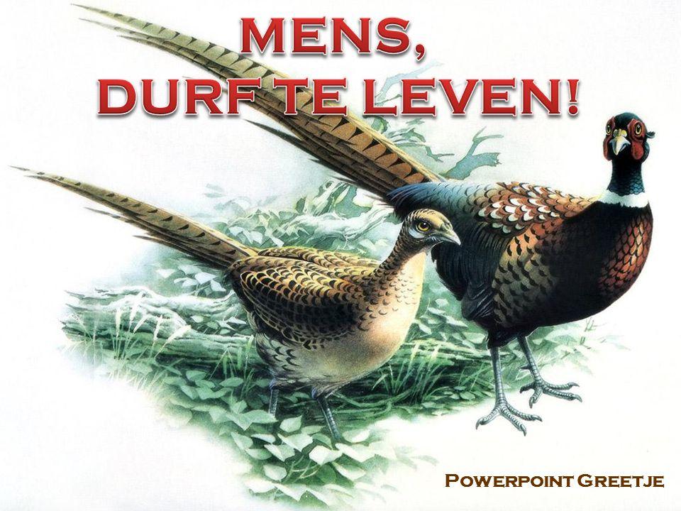 MENS, DURF TE LEVEN! Powerpoint Greetje .