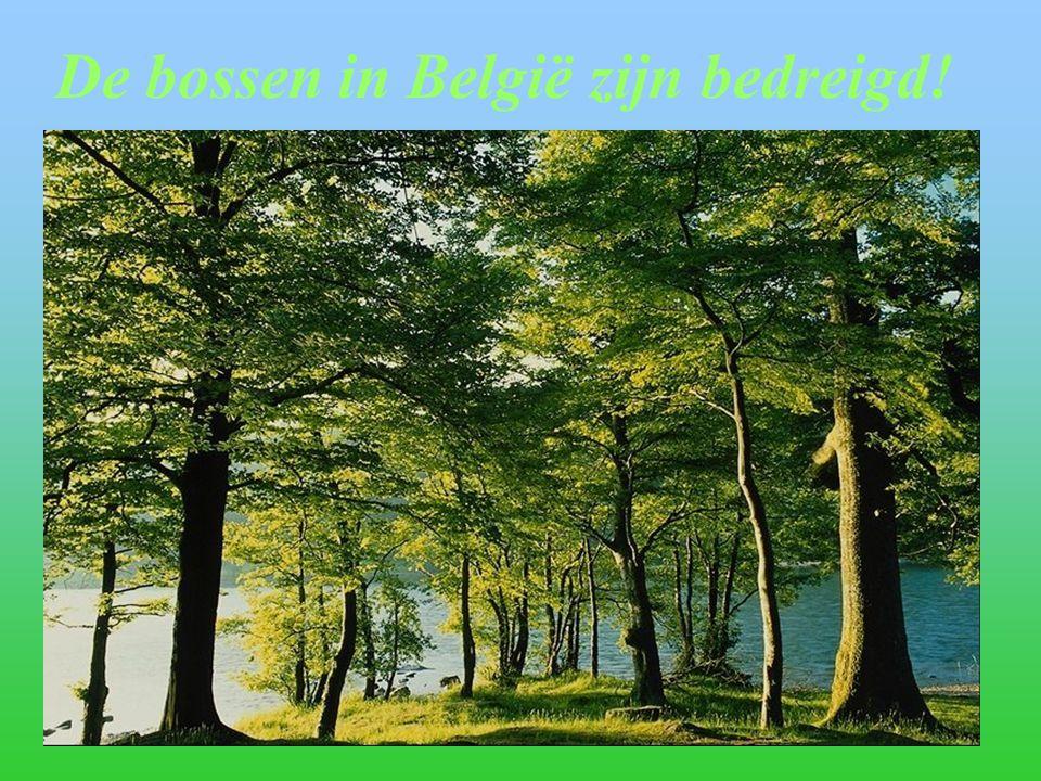 De bossen in België zijn bedreigd!
