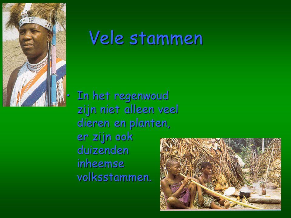 Vele stammen In het regenwoud zijn niet alleen veel dieren en planten, er zijn ook duizenden inheemse volksstammen.