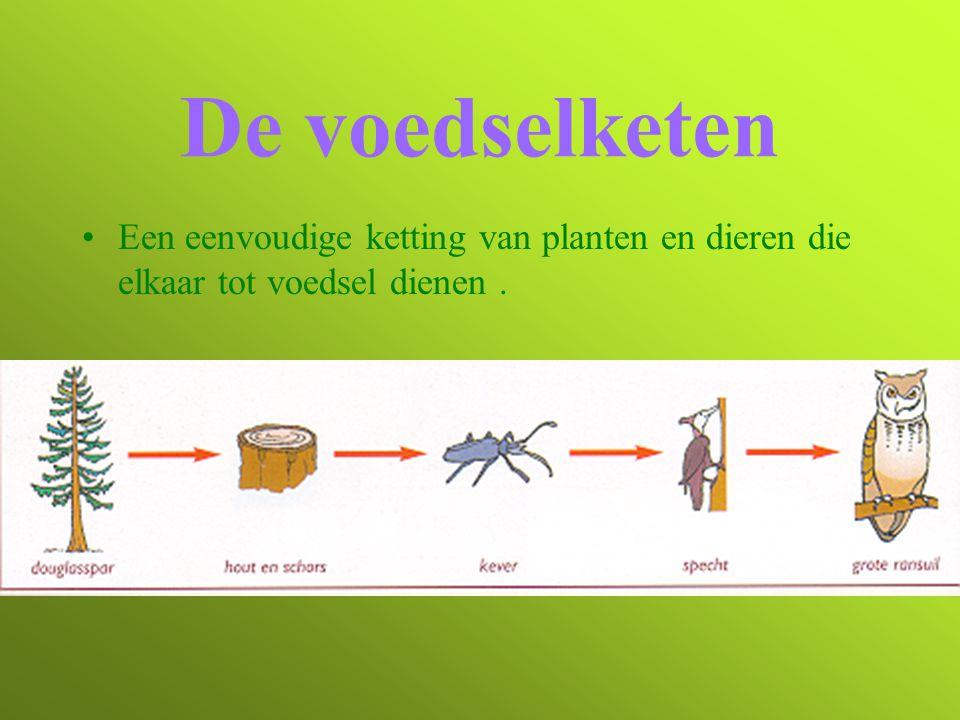 De voedselketen Een eenvoudige ketting van planten en dieren die elkaar tot voedsel dienen .