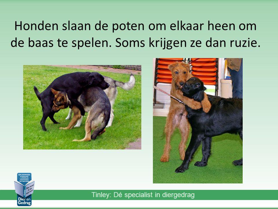 Honden slaan de poten om elkaar heen om de baas te spelen