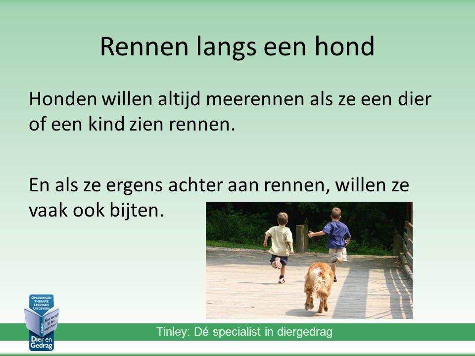 Rennen langs een hond Honden willen altijd meerennen als ze een dier of een kind zien rennen.