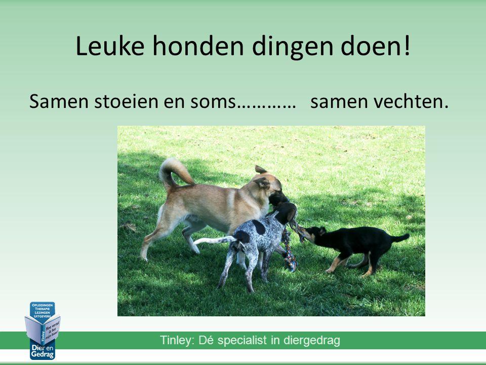 Leuke honden dingen doen!