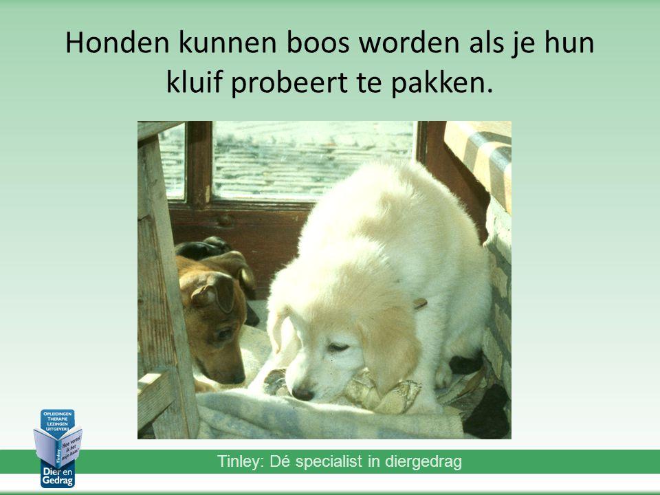 Honden kunnen boos worden als je hun kluif probeert te pakken.